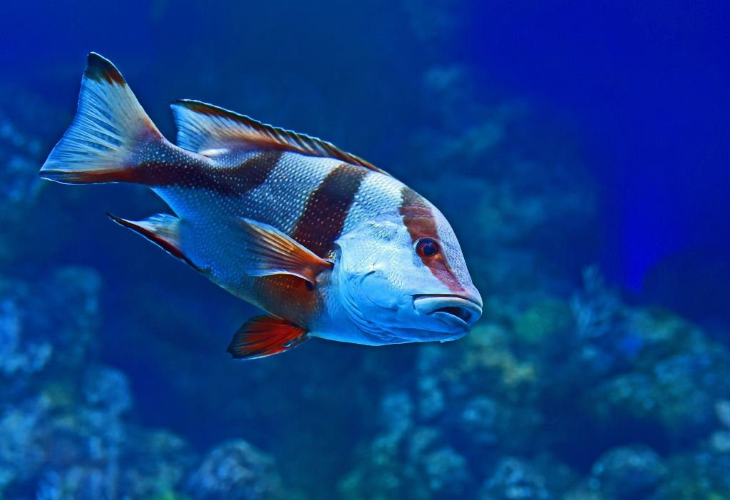 """david clode brgkhpvpvyi unsplash 1 This Question Boggles Everyone! Q.""""If humans can't see air, can fish see water?But since humans can see water can fish see air?"""""""
